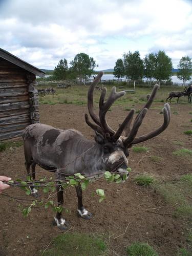 20090719_kiruna_abisko_007