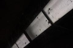 iMan Goes Freaky (iM@n) Tags: life blackandwhite netherlands night spider lowlight nikon fear low eindhoven nightlife paranoid ترس عنکبوت d90 اروپا خاموشی هلند سیاه nikond90 تله آیندهون