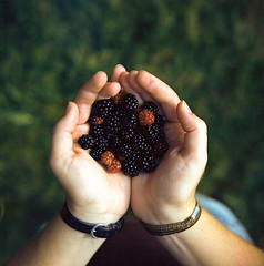 Berry 0101 (ukaaa) Tags: black macro slr 120 6x6 film grass closeup analog forest square hands berry friend berries dof blackberry kodak bokeh depthoffield filter topdown medium mf analogue bos canoscan birdseyeview blackberries a12 singlelensreflex celine ektar carlzeiss hasselblad500cm merelbeke sekonic l308s 8800f extensiontube21 ektar100 gentbos bottelare 80mmf28planarct