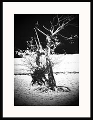 Loch Tay (Roj54) Tags: blackandwhite tree tay foreshore