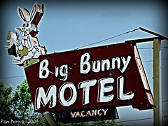 What's Up Doc? (pam's pics-) Tags: bunny hotel bed colorado neon sleep motel denver bugs co lakewood colfax bugsbunny motorinn bigbunny motorlodge highway40 bigbunnymotel pammorris colfaxave nikond40 denverpam