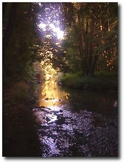 Abendstimmung (Indivien) Tags: life trees light sunset summer sky nature water beautiful forest sunrise germany deutschland freedom photo wasser peace sonnenuntergang god earth natur dream culture bach fluss bume natures creations ater sonnuntergang beautifulphoto