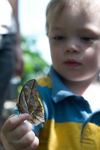 Butterfly Pavillion 04