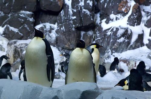 Vacation IId: SeaWorld 12