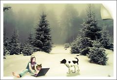 manipulation_1 (alferas9kuw) Tags: dog snow cold tree girl cat photoshop cool manipulation course lesson tutorial تصميم cs3 بنت دورة درس wenter ثلج كيف ضباب شجر ورشة قط كلب شلون تعلم فوتوشوب قطوه قطو دبليو انتر دروس دمج احترافي alferas9kuw