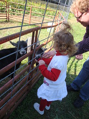 Lilliann & Daddy Feeding Goats
