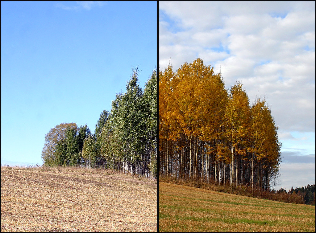 Autumn vs. Autumn