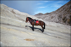 horse - Mount Bromo (Maciej Dakowicz) Tags: sea horse tourism nature animal indonesia volcano java asia hill crater bromo mountbromo mtbromo souheasasia