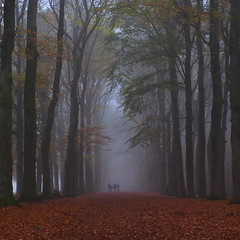 Family walk (Jos Mecklenfeld) Tags: family nature misty fog walking