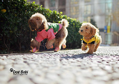 (Appleping) Tags: life dog pet apple bobi lovely