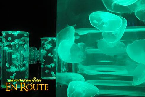 Manila Ocean Park Jellyfish