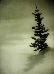 little tree shadow (jssteak) Tags: winter shadow forest vintage colorado grunge aged singletree textured tistheseason sapling snowshowing fauxvintage awardtree