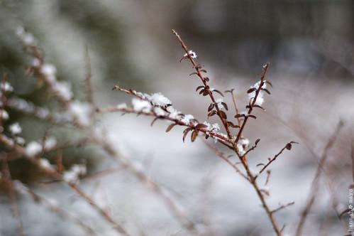 winter beauty, no.2