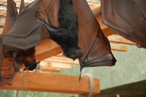 big bats at the zoo