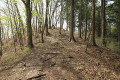 倉岳山の登り道