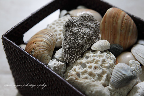 lito shells
