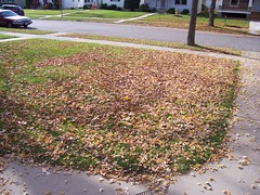 front yard leaves 2 before