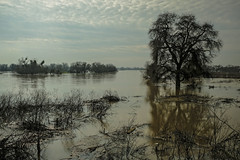 San Joaquin River (San Francisco Gal) Tags: sanjoaquinriver vernalis river flood tree water fence