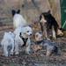 Aus dem Samstag Gewusel von mindestens  25 Hunden