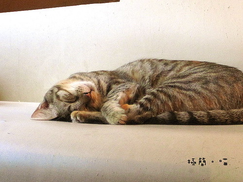 極簡貓20