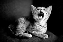 Yawn Portrait II