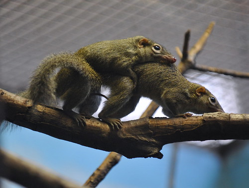 randy tree shrews