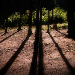 Relax #4 (StafbulCZ) Tags: wood light sun tree canon eos colours shadows czech beam czechrepublic tamron 2009 jarek gettyimages ceskyraj cesko echy esko tamron1750 400d eos400d canoneos400d jicinsko stafbulcz jinsko jaroslavvondracek