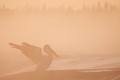 (Thomas Koidhis) Tags: morning mist rock sunrise canon river northwest pelican rapids 60 territories slave degrees 50d