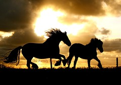 caballos (The Family Dog) Tags: horses clouds caballo cheval caballos twilight running cavalos equine equines cheveaux