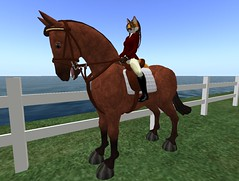 Courageous Spaz (Horse Mod) (Darky Delacroix) Tags: horses horse erin sl secondlife delacroix talamasca darky hoofit