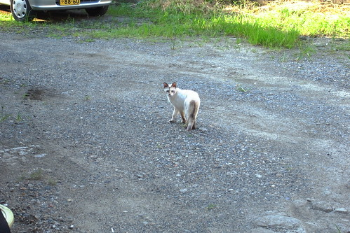 Today's Cat@20090805