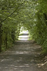 Alley (luckyme73406) Tags: sommer grn wald allee