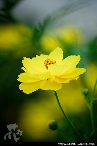 P_flower27