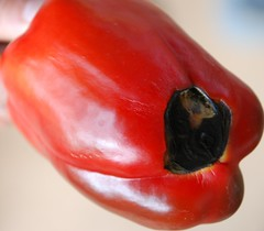 Blossom End Rot Red Bell Pepper 2