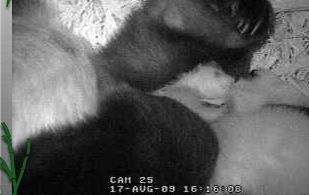 Today's Panda