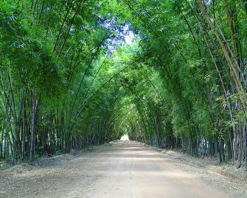 Galería de bambú [Bamboo gallery, Galerie de bambou, Loggia di bambú]