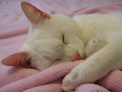 (twinkle_moon_bunny) Tags: white cute cat yuki