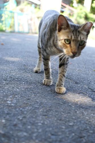 cat's walk