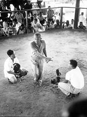 Cockfight, 1965