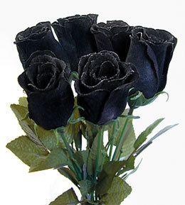 What Does black Rose Mean? | Nicehobbies.org | Hobby World
