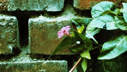 学校墙壁上的小花