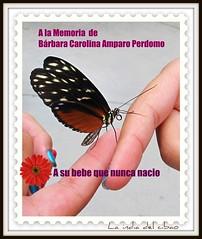 A la memoria de Brbara Carolina Amparo Perdomo y a la de su bebe que nunca nacio. (la india del cibao) Tags: dominican republic dominicana quisqueya laindiadelcibao theoriginalgoldseal barbaracarolinaamparoperdomo