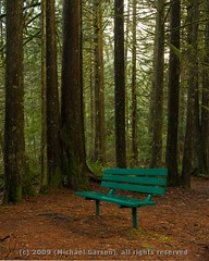 A place to ponder (Michael Garson) Tags: trees plant canada tree green nature rain forest bench nikon travelsofhomerodyssey