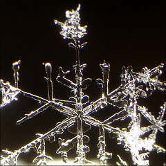~ SNOWFLAKE ~ (ViaMoi) Tags: snowflake winter snow ontario canada macro ice geometric nature closeup photography design photo photographer natural ottawa flake canadian form naturalist naturesfinest imagist naturewatcher viamoi natureselegantshots cybershot4mp