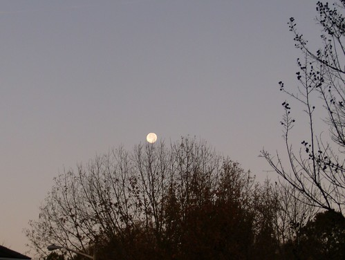 moon at morning