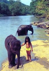 930200  Elephant Orphanage (rona.h) Tags: 1993 elephants srilanka february cacique orphange ronah