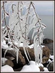 Lake Superior (Blondieyooper) Tags: winter tree ice water up december michigan lakesuperior