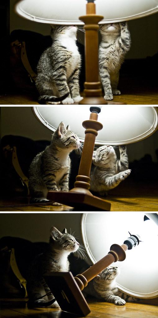 BB's Kittens