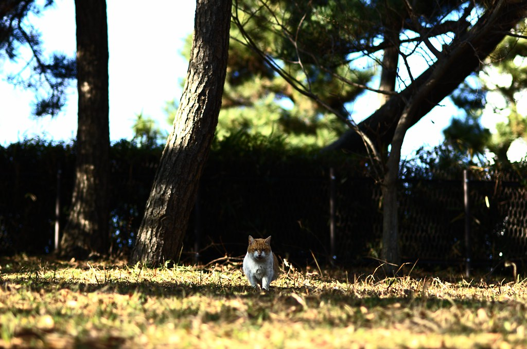 冬の猫達 #10