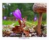 Otoño (Jabi Artaraz) Tags: autumn flower mushroom beautiful leaf oak europa europe sony bilbao otoño zb bilbo beautifulearth udazkena euskoflickr fineartphotos abigfave galanperna superaplus aplusphoto flickrbest impressedbeauy diamondclassphotographer flickrdiamond excapture jartaraz bderechosdeautorauthorscopyrightb©jabiartaraz bestofblinkwinners blinksuperstars